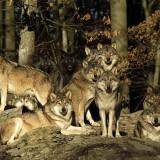 bfs_Wildpark_Bad_Mergentheim_Harald_Grunwald_1
