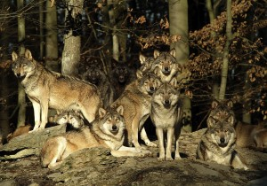bfs_Wildpark_Bad_Mergentheim_Harald_Grunwald_1