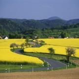 Bluehende Rapsfelder, Strasse, Saechsische Schweiz, Sachsen