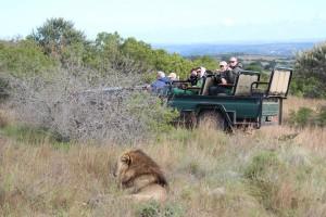Safari_BFS_Karawane