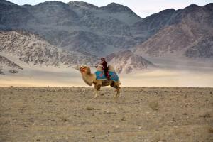 Kamel_im_Altai_ReisefieberReisen-300x200 Einmal durch das Abenteuerland