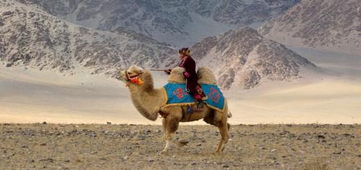 Kamel_im_Altai_ReisefieberReisen