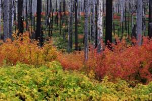 Fall colors,foliage,Cascade Mountains,Oregon,USA