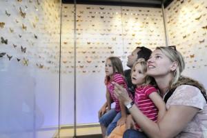 Liechtenstein_Landesmuseum_Schmetterlingsausstellung