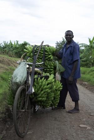Bananenernte_KarawaneReisen