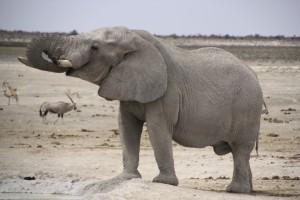 Elefant_am_Wasserloch_Etosha