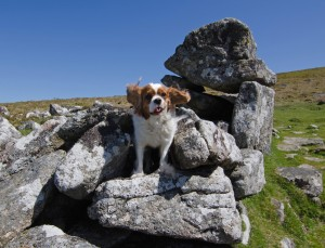 Grimspound_BFS_travel4dogs_UniqueDevonTours