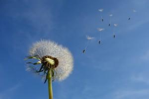 Pollen_BFS_Allergieundreisen_Pixabay