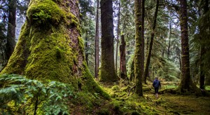Wald_Fasten_Your_Seatbelts_Tourismus_British_Columbia
