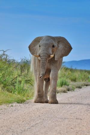 ElefantEtosha_Karawane_Tanja_Faigle