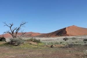 Namibia_Sossusvlei_TerraVista