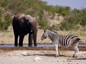 Namibia_Tiererlebnis_TerraVista
