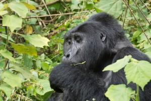 Ruanda_Karawane_TanjaFaigle