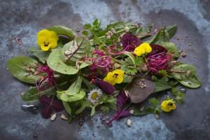 Wildkraeuter_Salat
